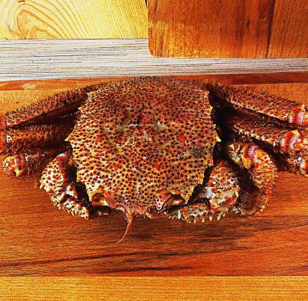 krab-volosatik