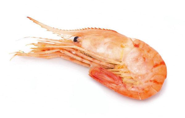 botan-krevetka-grebenchataya-cena-kupit