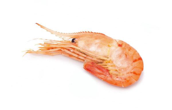 botan-krevetka-grebenchataya-kupit-cena