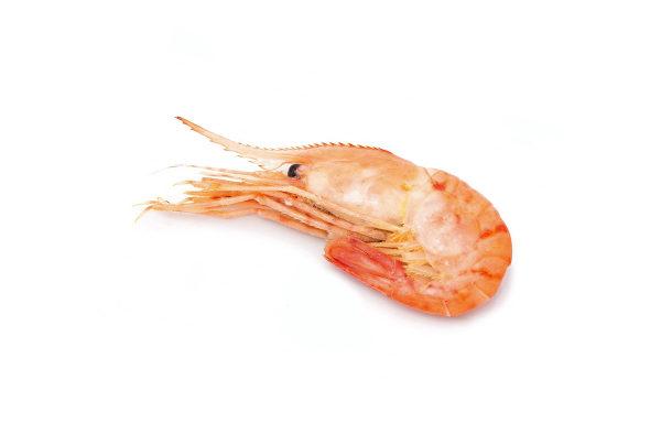 krevetka-botan-grebenchataya-kupit-cena-melkaya
