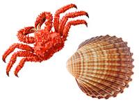 rakushka-grebeshka-hitin-kraba-optom