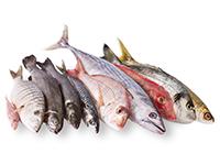 ryba-kupit-optom-vladivostok