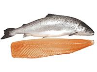ryba-svezhemorozhenaya-sm-kupit-optom